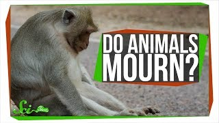 Do Animals Mourn Their Dead?