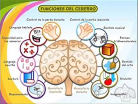 Lateralización Cerebral - YouTube