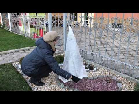 Укрывной чехол. Агротекс. Защита молодых растений от морозов