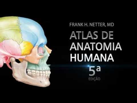 atlas de anatomia humana netter em portugues gratis