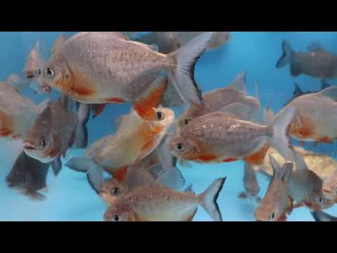 NEW YEAR MONSTER FISH SALE *FULL* STOCK