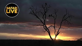safariLIVE - Sunset Safari - April 23, 2019- Part 1