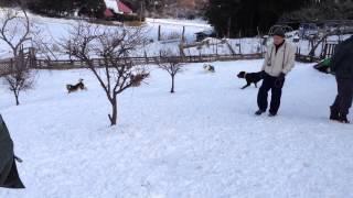 雪が積もった里山ドッグランサムさんで、めいっぱい仲間と遊んできました.