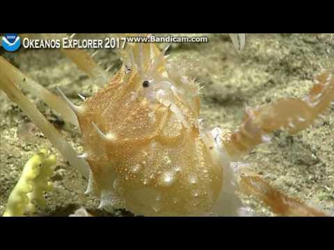 Okeanos Dive Howland Island
