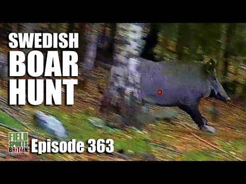 Fieldsports Britain - Swedish Boar Hunt