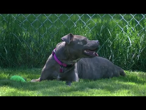Dogs In Need Of Homes On National Rescue Dog Day