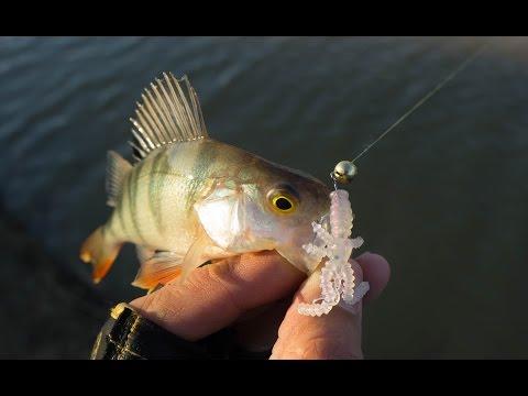рыбалка на шадрихе