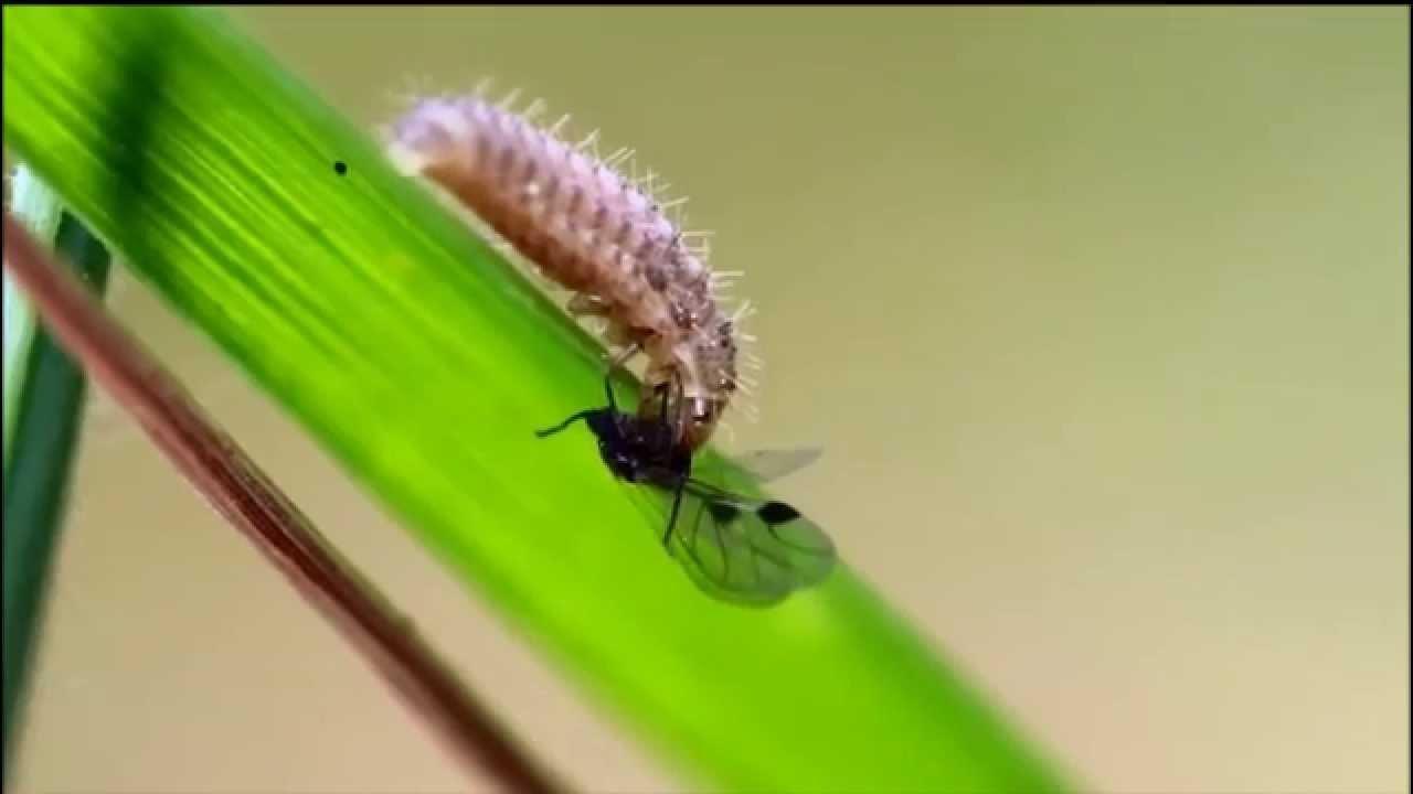 insecticide moucheron maison best insecticide autocollant raid antimouches moucherons dans la. Black Bedroom Furniture Sets. Home Design Ideas