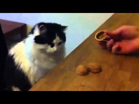 Sweet Cat Funny Trick- Amazing Smart Cat