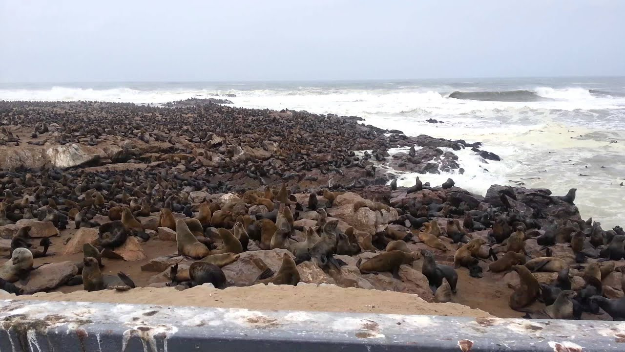 namibia cape cross seal colony youtube. Black Bedroom Furniture Sets. Home Design Ideas