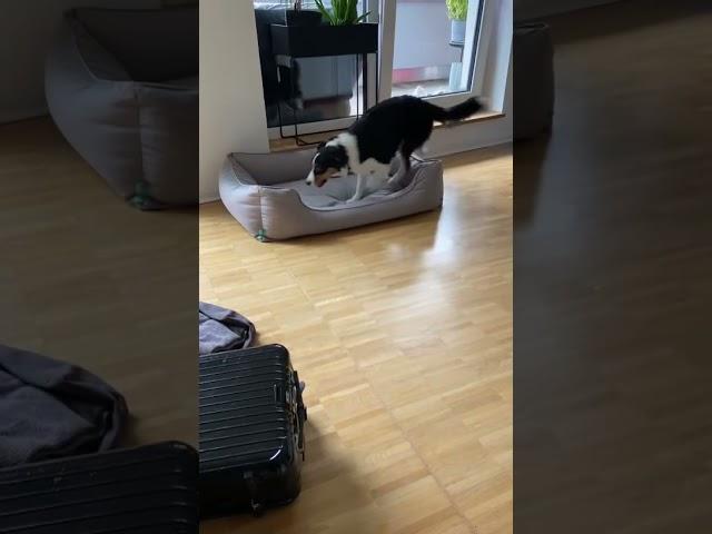Bailey trainiert