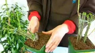 Выбор саженцев и уход за розами!(С другими видео-лекциями и мастер-классами флористов можно ознакомиться на Видео-Портале