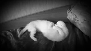 Уже у кошки крёстного появились котята 🐱