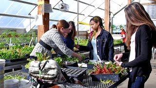 Integrated Studies: Sustainability and Cross-Curricular Connections