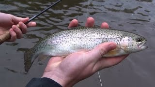 Fly Fishing Pennsylvania 2015