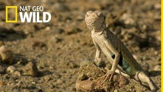 Meksyk nieodkryty - oglądaj na Nat Geo Wild