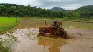 Rice Farming Kerala