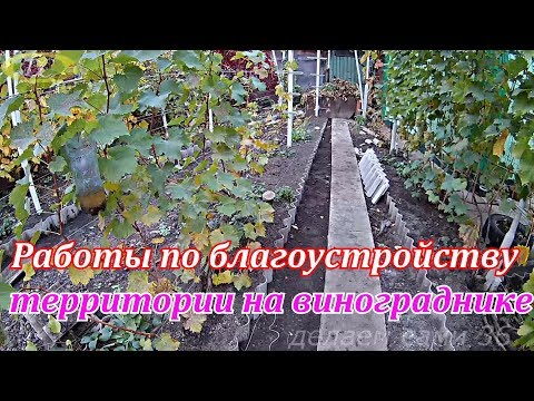 Виноградник осенью.Осенние работы по благоустройству территории на винограднике