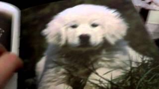 Macchia-Pet Parade Club