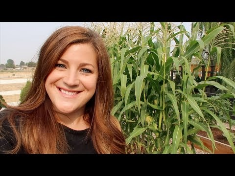 Planting Fall Crops and a Bunch of Other Random Things 👩🌾🍂// Garden Answer