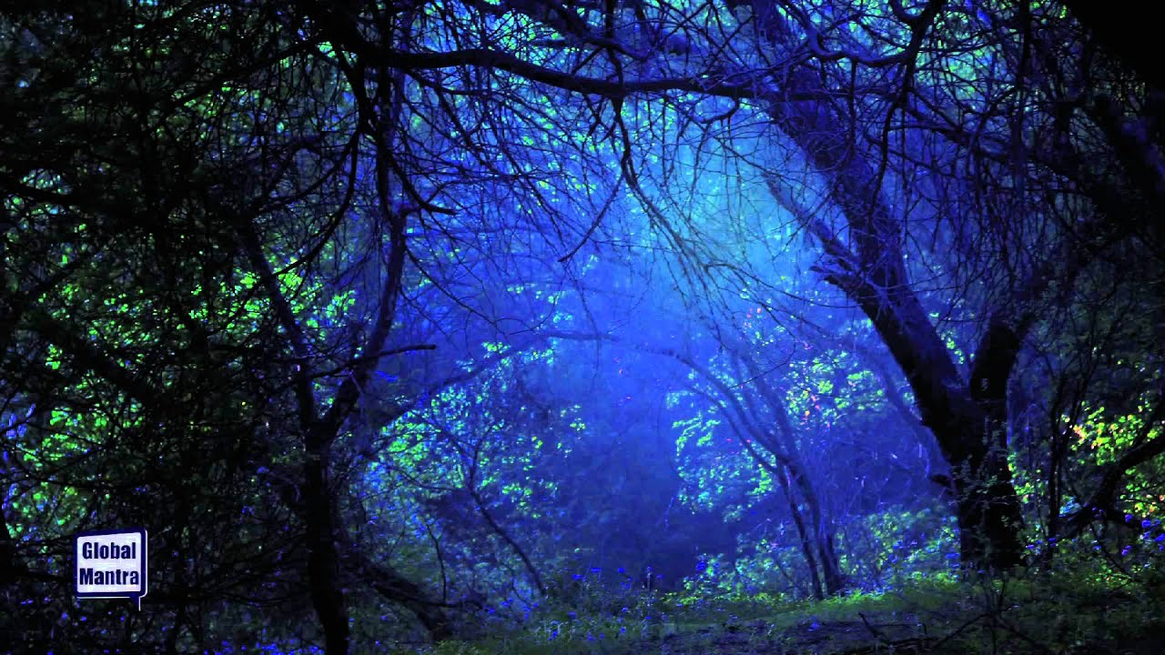 Starry Night Forest Sounds At Night Youtube