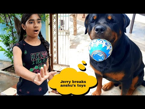 irratating Jerry part 2||funny dog videos||funny dogs||cute dogs.