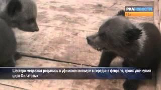 Медвежата резвятся в уфимском вольере