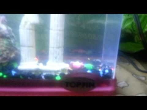 GloFish And Fry