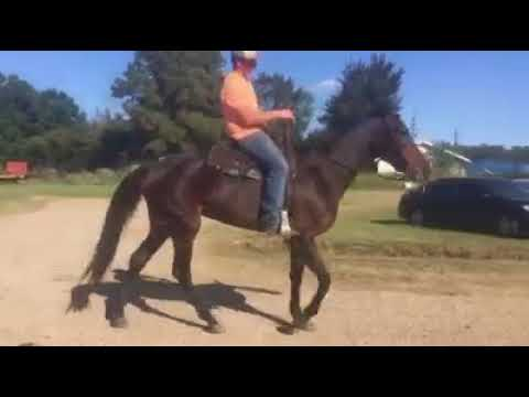 Retired harness racehorse saved from slaughter, available for adoption
