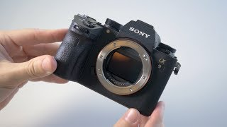 Sony A9 - Review and Sample Photos