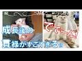 【癒し】貫禄ですぎだろ!(笑)  めまぐるしい成長を遂げた猫たちが愛おしい♡