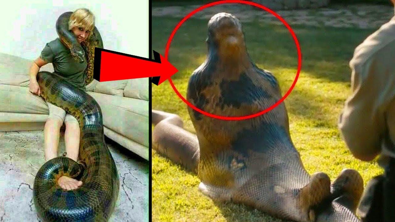पालतू जानवर जिन्होने अपने मालिक का किया ऐसा हाल | Animal Pets Who Attacked Their Owners