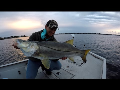 Big Snook Crushing a Topwater