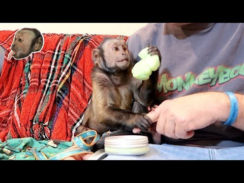 Monkey EXCITED For Silly Putty!