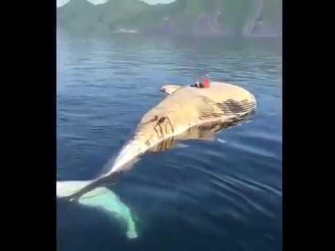 madeintyo - Dead Whale