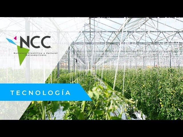 En Italia, los agricultores cambian los cítricos por frutos tropicales
