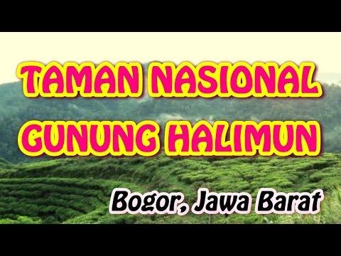 wisata-indonesia:-taman-nasional-gunung-halimun,-bogor-jawa-barat---indonesia.-001