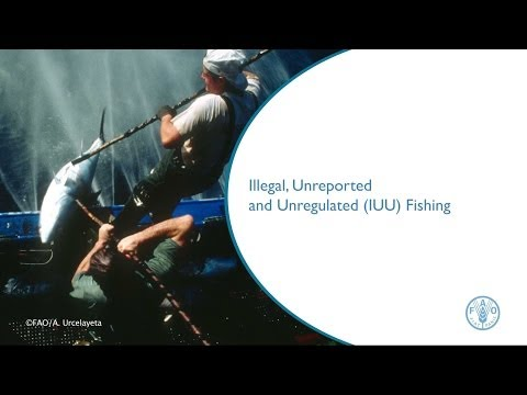 Illegal, Unreported And Unregulated (IUU) Fishing