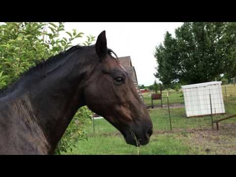 Horse Tail And Mane Itch - Causes & Treatments - Mr. T Tail Rubbing