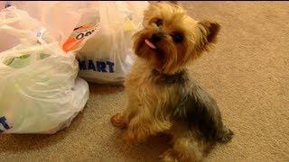 Teddy's Petsmart Haul!
