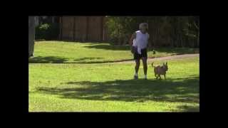 Awesome Dog Training!  Quick,easy, And Definitely Effective