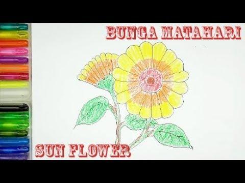 Bunga Matahari Menggambar Dan Mewarnai Bunga Matahari Dengan Crayon Youtube