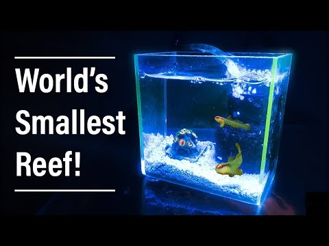 The World's Smallest Reef Aquarium!