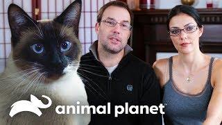 ¡El gato despierta a los dueños todas las madrugadas! | Mi gato endemoniado | Animal Planet