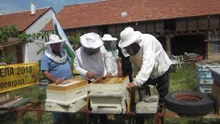 Прехвърляне на пчелна ларва 2