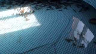 выращивание рыбок в домашних условиях(, 2014-05-31T11:26:40.000Z)