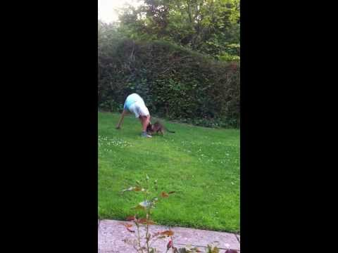 Bengal Cat Chases Boy