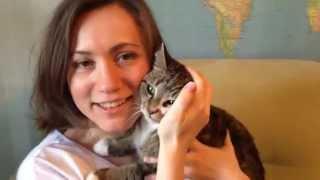 Кошка Соня — европейская гладкошерстная порода