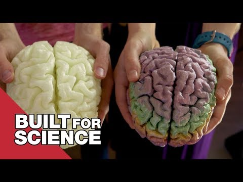 I Got To See And Hold My Brain