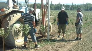 Установка столбов опоры под шпалеру в саду.(, 2016-09-07T08:43:23.000Z)